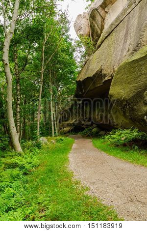 Path In Forrest By Rock Wall