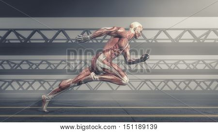 Male muscular system running on track . This is a 3d render illustration