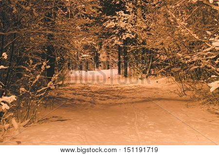 Snowbound pathway in winter-time forest night shot with lamppost illuminating