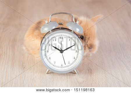 Gray Clock And Shy Rabbit On Wooden A Background
