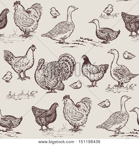Farm birds seamless pattern. Chickens geese ducks turkey packaging farm products hand drawn vector