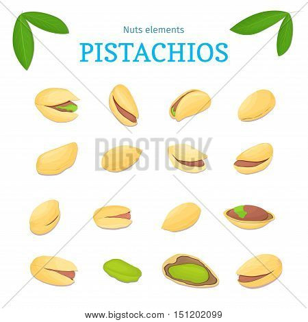 Vector set of nuts. Pistachio nut fruit, whole, peeled, piece of half