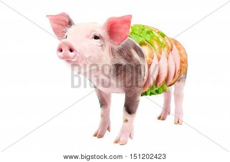 Conceptual image, portrait of a pig becomes into sandwich with sausage, isolated on white background