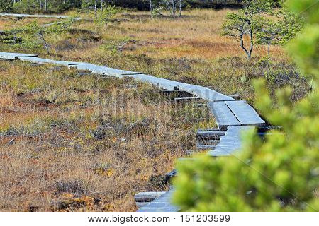 A wooden path and a scenic bog.