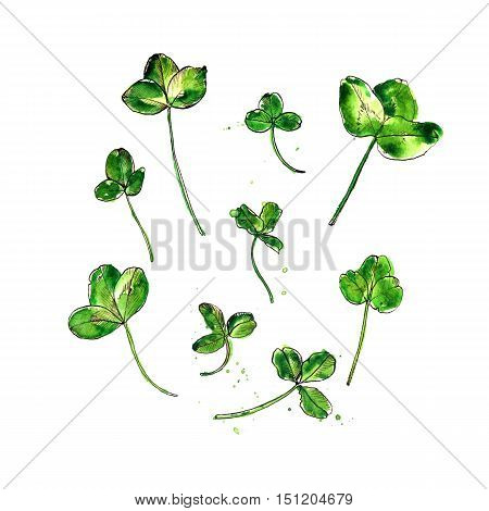 Set of watercolor and ink drawing trefoil leaves of clover, isolated painted color floral elements, hand drawn natural illustration