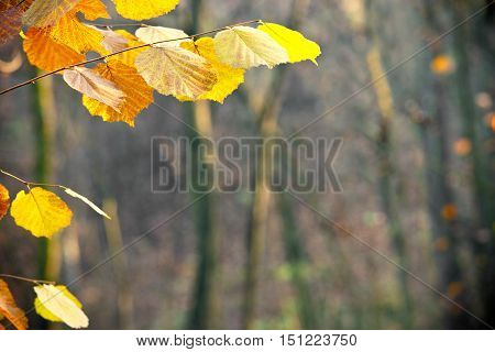 detail of orange leaves in the forest shallow depth of field
