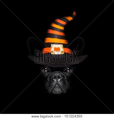 Halloween Dog On Black Backgroud