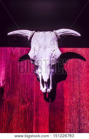 Steer skull on barn door in East Texas