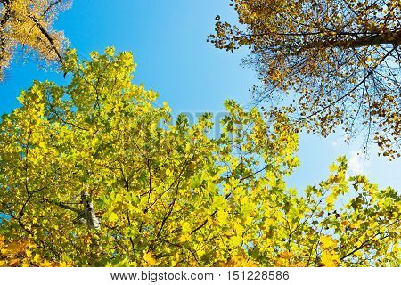 a autumn scenery with trees and sky
