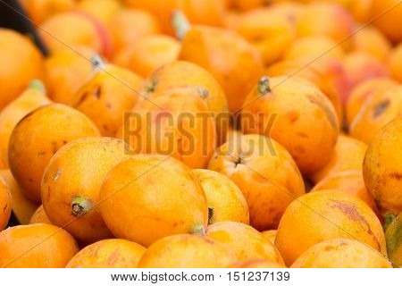 Ripe yellow fruits of loquat. Eriobotrya japonica. Medlar background