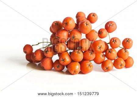 Rowan berries isolated on a white background