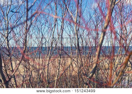Baltic Sea horizon line through the bushes on the sandy beach in the early spring on a sunny day
