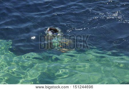 Man snorklieng in crystal sea crystal water