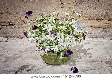 Ornithogalum And Pansies Bouquet Near The Concrete Wall