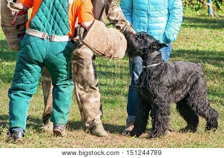 Black Russian Terrier at the dog training course with tutors