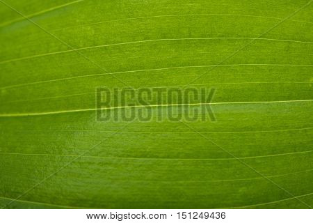 green leaf texture ecology, summer close up