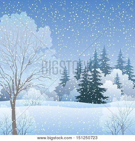 Winter Christmas Holiday Woodland Landscape, Forest with Fir and Deciduous Trees and Snow. Eps10, Contains Transparencies. Vector