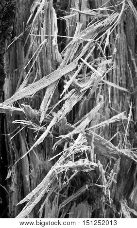 Black and white close up of splintered wood.