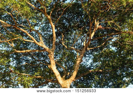 canopy in dense, lush forest under blue sky