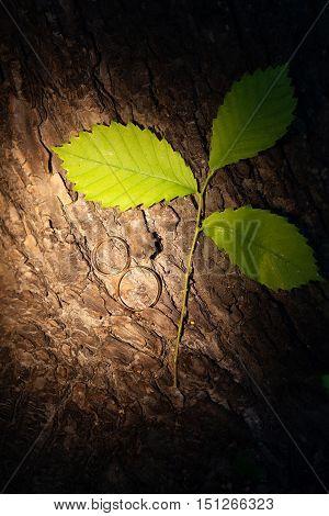 Wedding rings lying on a tree bark.