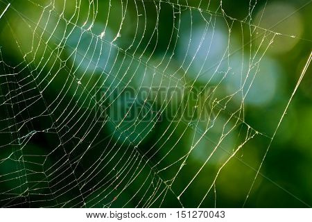 Spiderweb on blurred background of green leaves.