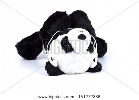 Panda bear lay down and listen to the music on white isolated.