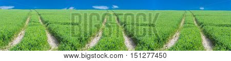 Three tractor tracks through a green agricultural field in spring Scenics.