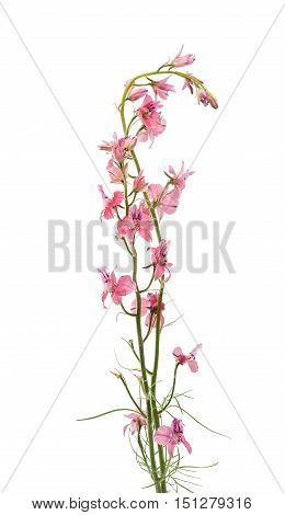 meadow of pink flowers on a white background