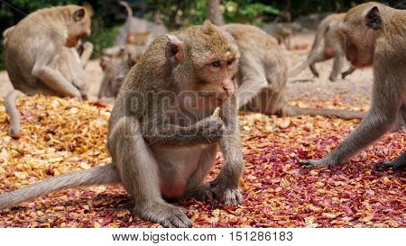 monkey eating food that people brought to them