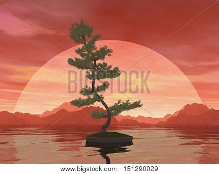 Scotch pine bonsai tree by red sunset over the water - 3D render
