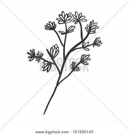 plant with ramifications and flowers vector illustration