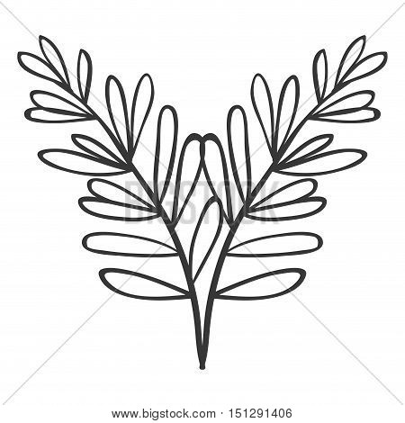 pair of branches with oval leaves vector illustration
