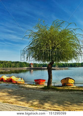 big green tree on the sandy shore of the Alum Lake Kamencove jezero in Chomutov with red and yellow boats and pedal boats in the region Ustecky kraj at the end of the summer season in Czech republic