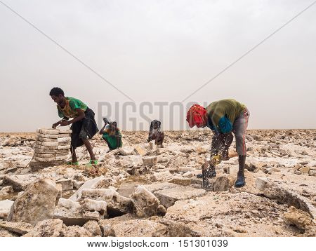 DANAKIL DEPRESSION ETHIOPIA - JUNE 29 2016: Afar men mining salt from salt flats in Afar region Danakil Depression Ethiopia.