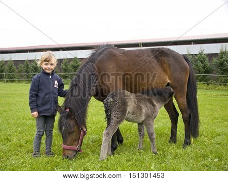 Little girl with pony mare and the foal