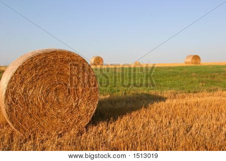 Hay Bale In The Round