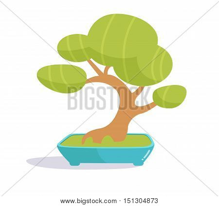 Bonsai tree. Illustration on white background. Isolated