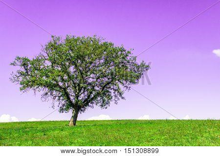 A single tree in a meadow, Albero singolo in un panorama