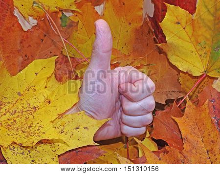 Man Hand In Autumn Leaves