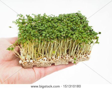 Watercress At Closeup In Hand