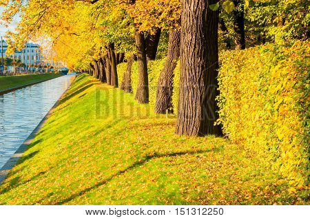 Autumn landscape - Swan Canal in St Petersburg and autumn park with row of golden autumn trees in sunny weather. Bright autumn sunset landscape with autumn trees - autumn nature with autumn leaves