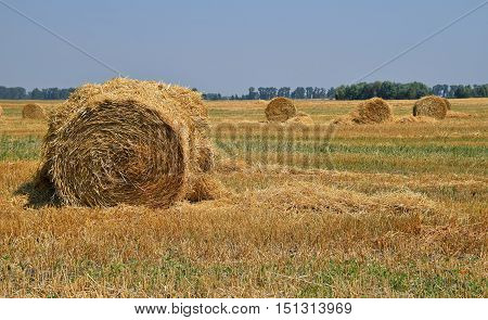Bale Of Straw In Stubble Field After Harvesting