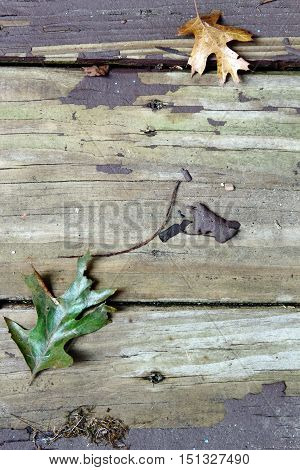 A wooden background with peeled paint and fall leaves in Autumn season with copy space.
