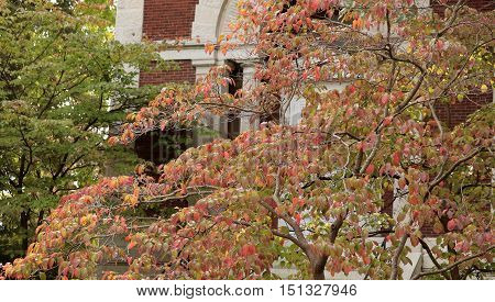 Dogwood tree growing in front of a building in the fall