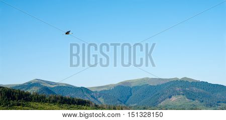 Summer landscape with the flying white stork in the Ukrainian Carpathian Mountains.