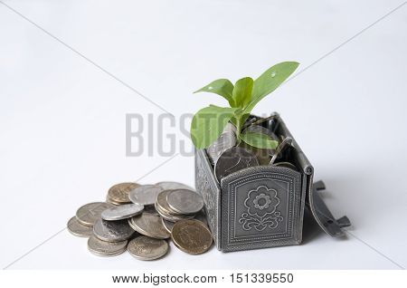 Green plant in coins in the chest and close rubles