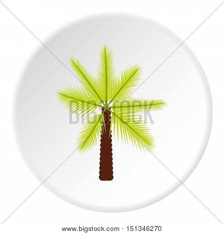 Big palm tree icon. Flat illustration of big palm tree vector icon for web