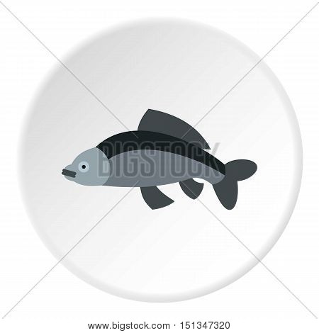 Carp icon. Flat illustration of carp vector icon for web