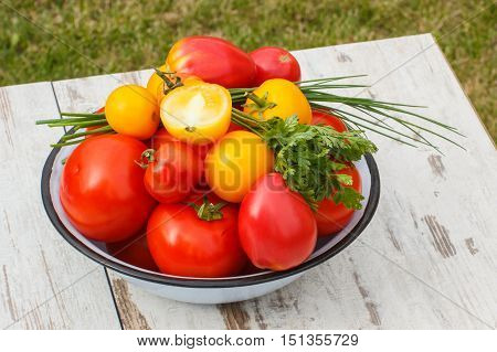 Tomatoes In Metal Bowl With Green Parsley And Chives In Garden On Sunny Day