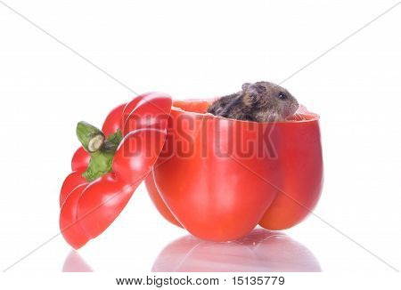 hamster and pepper